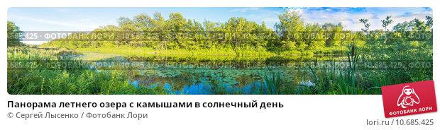 Купить «Панорама летнего озера с камышами в солнечный день», фото № 10685425, снято 8 июля 2015 г. (c) Сергей Лысенко / Фотобанк Лори
