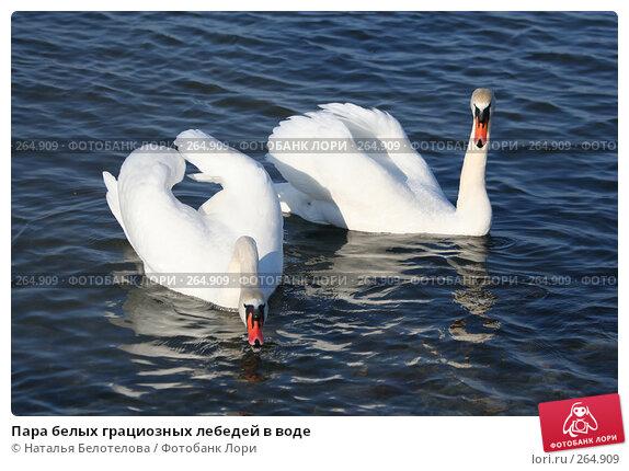 Пара белых грациозных лебедей в воде, фото № 264909, снято 29 марта 2008 г. (c) Наталья Белотелова / Фотобанк Лори