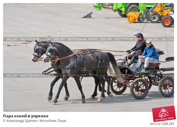 Пара коней в упряжке, эксклюзивное фото № 268241, снято 27 апреля 2008 г. (c) Александр Щепин / Фотобанк Лори
