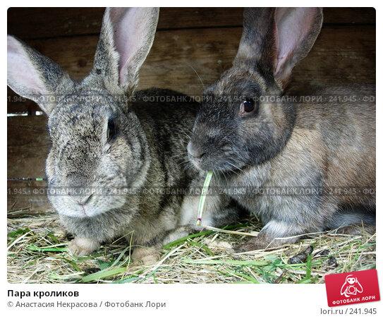 Купить «Пара кроликов», фото № 241945, снято 27 мая 2007 г. (c) Анастасия Некрасова / Фотобанк Лори