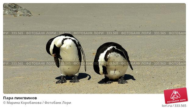 Пара пингвинов, фото № 333565, снято 16 февраля 2008 г. (c) Марина Коробанова / Фотобанк Лори