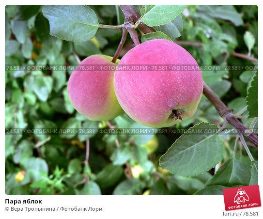 Пара яблок, фото № 78581, снято 20 августа 2017 г. (c) Вера Тропынина / Фотобанк Лори