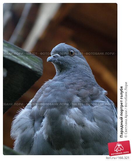 Парадный портрет голубя, фото № 166321, снято 27 августа 2005 г. (c) Светлана Архи / Фотобанк Лори