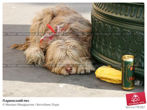 Парижский пес, фото № 75557, снято 7 января 2005 г. (c) Михаил Мандрыгин / Фотобанк Лори