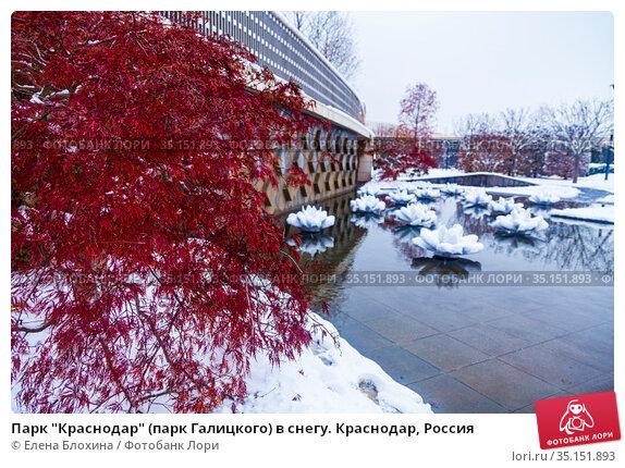 """Парк """"Краснодар"""" (парк Галицкого) в снегу. Краснодар, Россия. Редакционное фото, фотограф Елена Блохина / Фотобанк Лори"""