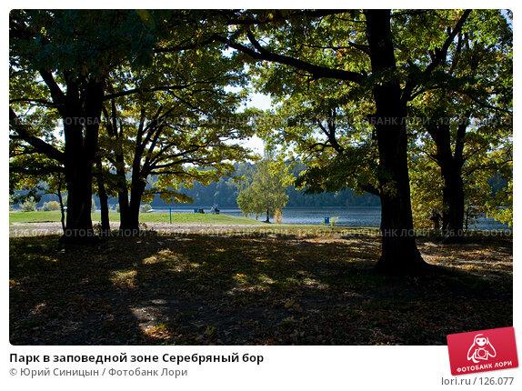 Парк в заповедной зоне Серебряный бор, фото № 126077, снято 22 сентября 2007 г. (c) Юрий Синицын / Фотобанк Лори
