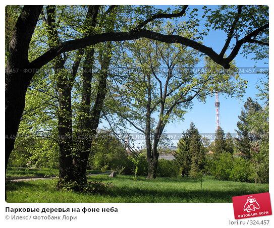 Парковые деревья на фоне неба, фото № 324457, снято 17 мая 2008 г. (c) Морковкин Терентий / Фотобанк Лори