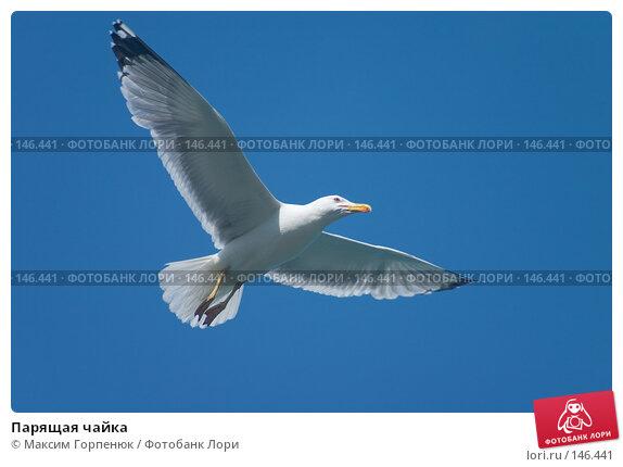 Парящая чайка, фото № 146441, снято 6 июня 2004 г. (c) Максим Горпенюк / Фотобанк Лори