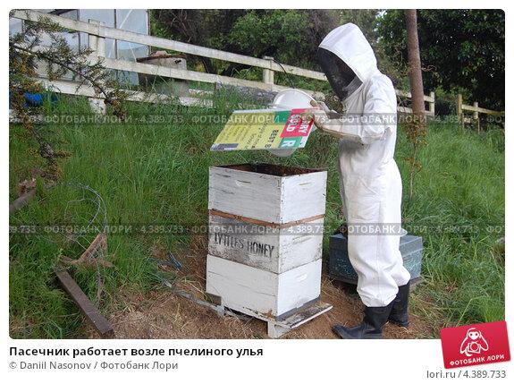 Пасечник работает возле пчелиного улья (2010 год). Редакционное фото, фотограф Daniil Nasonov / Фотобанк Лори