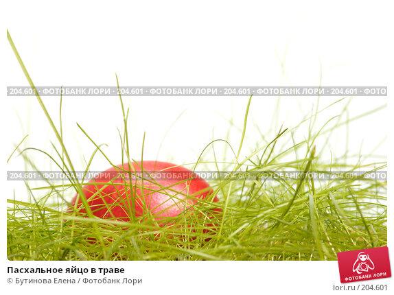 Купить «Пасхальное яйцо в траве», фото № 204601, снято 19 февраля 2008 г. (c) Бутинова Елена / Фотобанк Лори