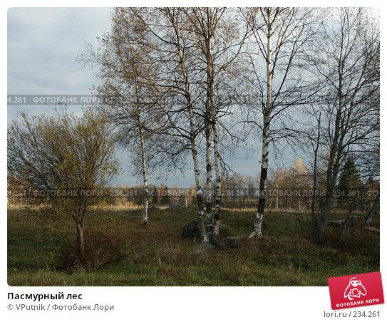 Пасмурный лес, фото № 234261, снято 8 октября 2005 г. (c) VPutnik / Фотобанк Лори