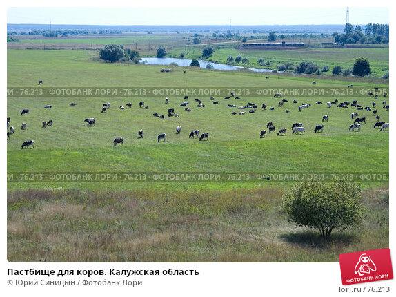 Купить «Пастбище для коров. Калужская область», фото № 76213, снято 11 августа 2007 г. (c) Юрий Синицын / Фотобанк Лори