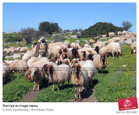 Купить «Пастух и стадо овец», фото № 831849, снято 17 февраля 2007 г. (c) Irina Opachevsky / Фотобанк Лори