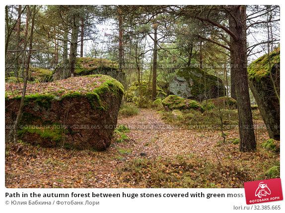 Купить «Path in the autumn forest between huge stones covered with green moss and lichens. Kuusinen Island, Kotka, Finland», фото № 32385665, снято 2 ноября 2019 г. (c) Юлия Бабкина / Фотобанк Лори