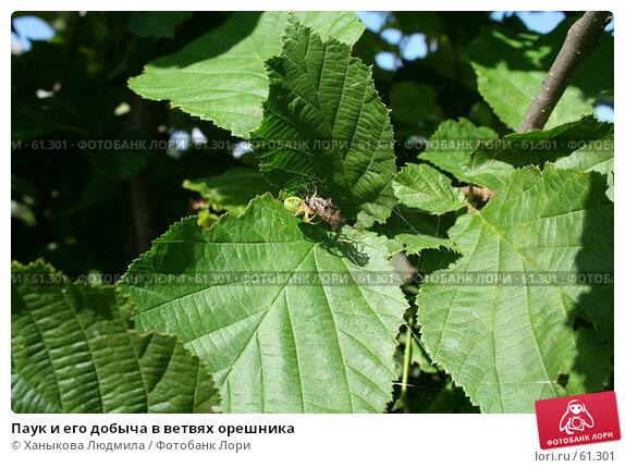 Паук и его добыча в ветвях орешника, фото № 61301, снято 24 июня 2007 г. (c) Ханыкова Людмила / Фотобанк Лори