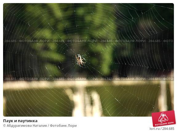 Паук и паутинка, фото № 284685, снято 27 апреля 2008 г. (c) Абдурагимова Наталия / Фотобанк Лори