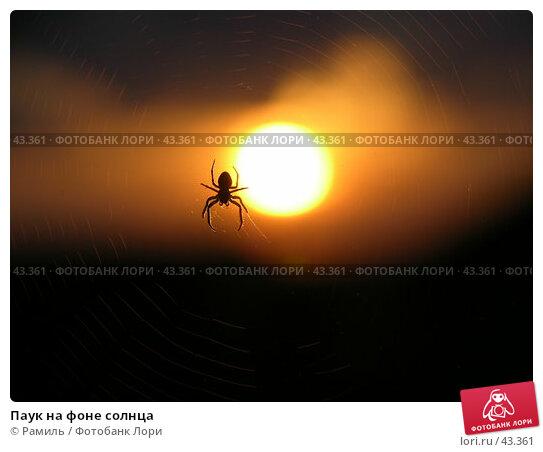 Паук на фоне солнца, фото № 43361, снято 21 июня 2006 г. (c) Рамиль / Фотобанк Лори