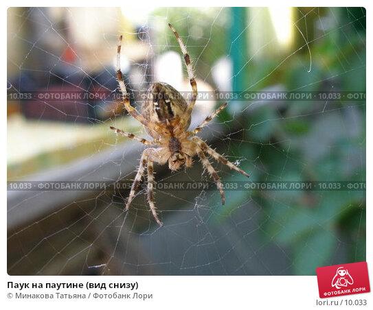 Паук на паутине (вид снизу), фото № 10033, снято 27 августа 2006 г. (c) Минакова Татьяна / Фотобанк Лори