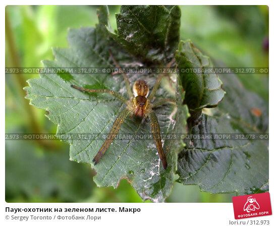 Паук-охотник на зеленом листе. Макро, фото № 312973, снято 28 июля 2007 г. (c) Sergey Toronto / Фотобанк Лори