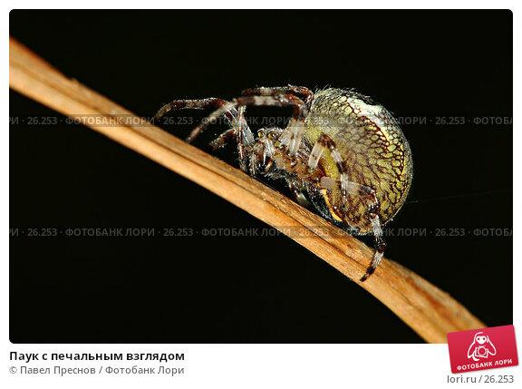 Паук с печальным взглядом, фото № 26253, снято 8 сентября 2006 г. (c) Павел Преснов / Фотобанк Лори