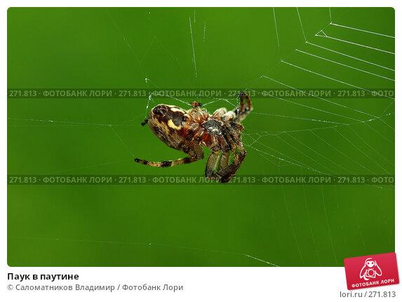 Паук в паутине, фото № 271813, снято 17 января 2017 г. (c) Саломатников Владимир / Фотобанк Лори