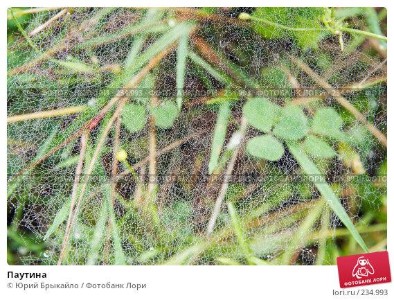 Паутина, фото № 234993, снято 2 сентября 2007 г. (c) Юрий Брыкайло / Фотобанк Лори