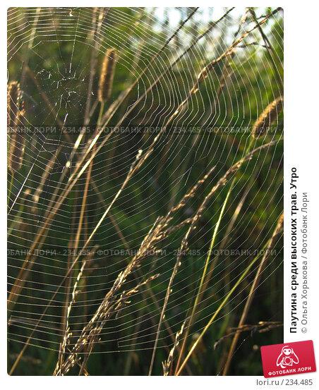 Паутина среди высоких трав. Утро, фото № 234485, снято 8 августа 2007 г. (c) Ольга Хорькова / Фотобанк Лори