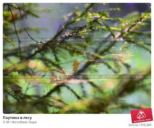 Паутина в лесу, фото № 319265, снято 23 октября 2016 г. (c) Михаил / Фотобанк Лори