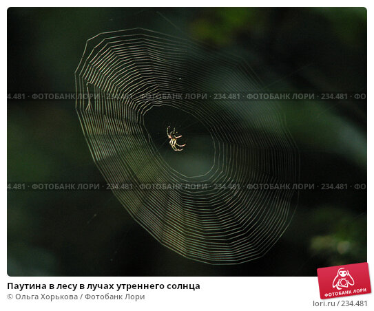 Паутина в лесу в лучах утреннего солнца, фото № 234481, снято 7 августа 2007 г. (c) Ольга Хорькова / Фотобанк Лори