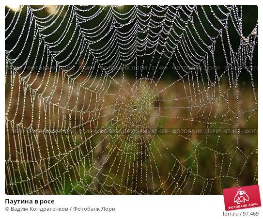 Паутина в росе, фото № 97469, снято 22 января 2017 г. (c) Вадим Кондратенков / Фотобанк Лори