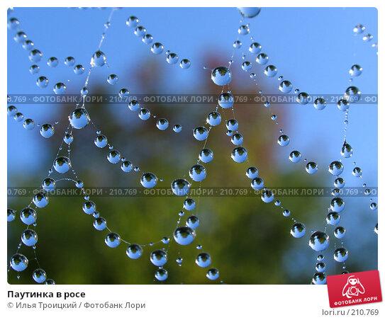 Паутинка в росе, фото № 210769, снято 18 сентября 2005 г. (c) Илья Троицкий / Фотобанк Лори