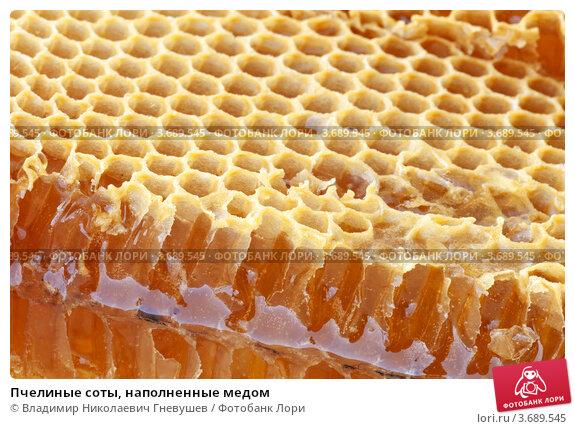 Пчелиные соты, наполненные медом. Стоковое фото, фотограф Владимир Николаевич Гневушев / Фотобанк Лори