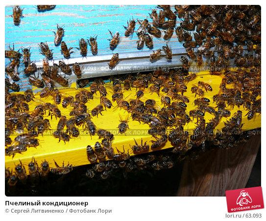 Пчелиный кондиционер, фото № 63093, снято 15 июля 2007 г. (c) Сергей Литвиненко / Фотобанк Лори