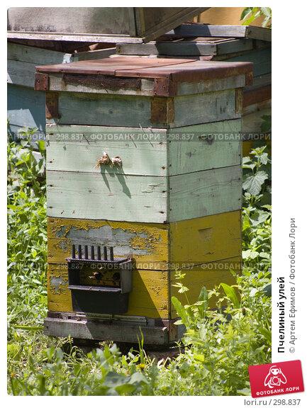 Пчелиный улей, фото № 298837, снято 3 мая 2008 г. (c) Артем Ефимов / Фотобанк Лори