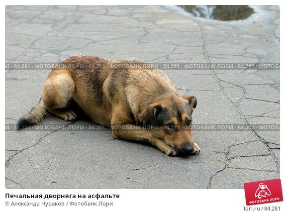 Купить «Печальная дворняга на асфальте», фото № 84281, снято 15 сентября 2007 г. (c) Александр Чураков / Фотобанк Лори