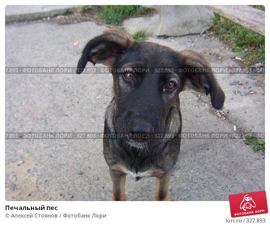 Печальный пес, фото № 327893, снято 1 августа 2004 г. (c) Алексей Стоянов / Фотобанк Лори