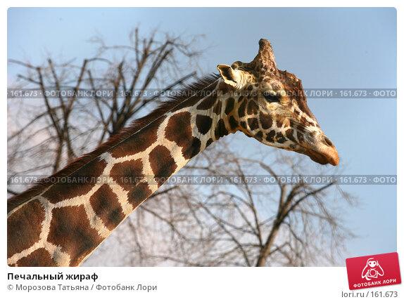 Печальный жираф, фото № 161673, снято 31 марта 2007 г. (c) Морозова Татьяна / Фотобанк Лори