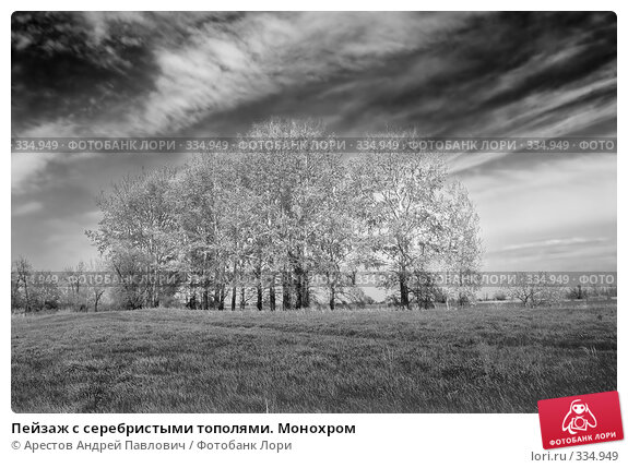 Пейзаж с серебристыми тополями. Монохром, фото № 334949, снято 20 апреля 2008 г. (c) Арестов Андрей Павлович / Фотобанк Лори
