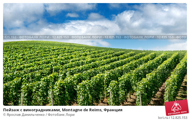 the background of the french region of champagne