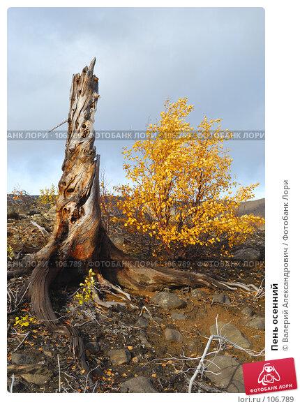 Пень осенний, фото № 106789, снято 22 сентября 2007 г. (c) Валерий Александрович / Фотобанк Лори