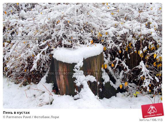 Купить «Пень в кустах», фото № 106113, снято 16 октября 2007 г. (c) Parmenov Pavel / Фотобанк Лори