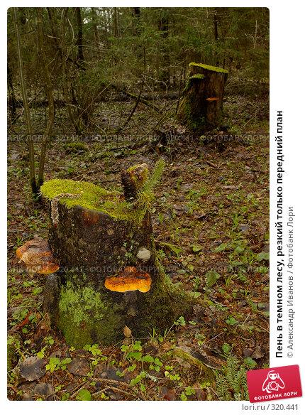 Пень в темном лесу, резкий только передний план, фото № 320441, снято 30 мая 2017 г. (c) Александр Иванов / Фотобанк Лори