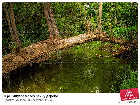 Перекинутое через речку дерево, фото № 335421, снято 20 июля 2017 г. (c) Александр Иванов / Фотобанк Лори