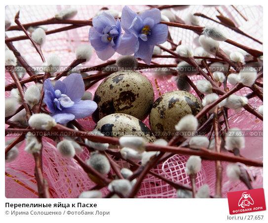 Перепелиные яйца к Пасхе, фото № 27657, снято 26 марта 2007 г. (c) Ирина Солошенко / Фотобанк Лори