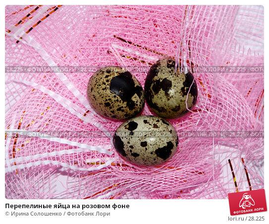 Перепелиные яйца на розовом фоне, фото № 28225, снято 26 марта 2007 г. (c) Ирина Солошенко / Фотобанк Лори
