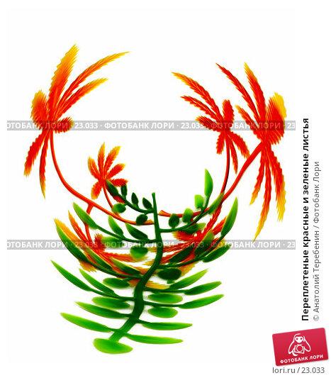 Купить «Переплетеные красные и зеленые листья», иллюстрация № 23033 (c) Анатолий Теребенин / Фотобанк Лори