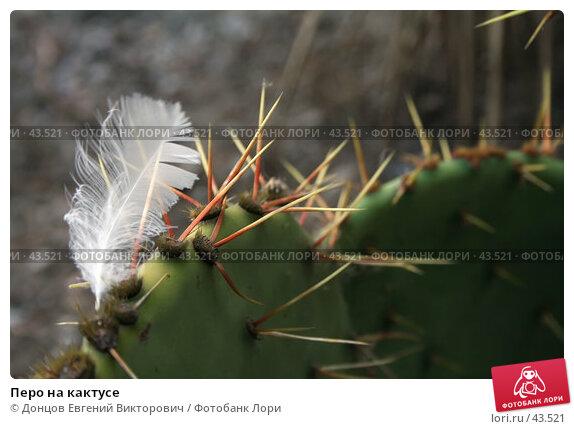 Перо на кактусе, фото № 43521, снято 9 августа 2006 г. (c) Донцов Евгений Викторович / Фотобанк Лори