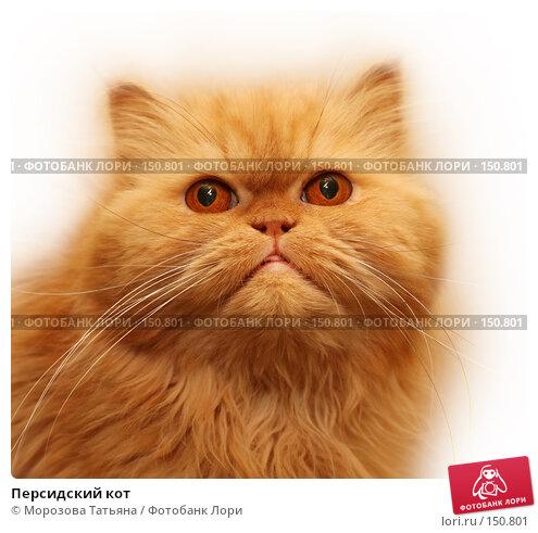 Купить «Персидский кот», фото № 150801, снято 23 апреля 2007 г. (c) Морозова Татьяна / Фотобанк Лори