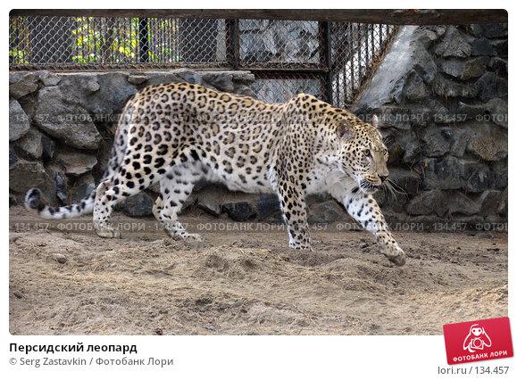 Персидский леопард, фото № 134457, снято 10 октября 2004 г. (c) Serg Zastavkin / Фотобанк Лори