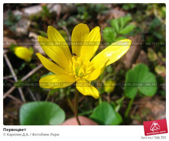 Первоцвет, фото № 166701, снято 21 апреля 2007 г. (c) Карелин Д.А. / Фотобанк Лори